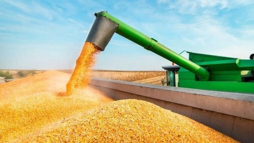 Más controles a las exportaciones de maíz