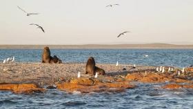 Descubriendo el primer parque nacional marino costero de la Argentina