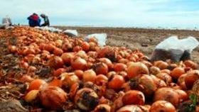 Río Negro inicia la primera exportación de cebollas a Brasil