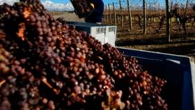 La bioeconomía de la industria del vino
