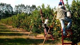 Frutas frescas: una cuarta generación de productores expande su horizonte