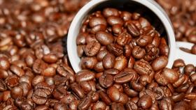 JNC: producción y exportaciones de café apuntan a ser mejores en 2021