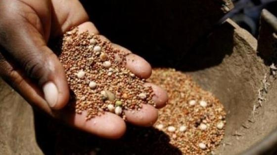 Las semillas (base de la alimentación) en pocas manos
