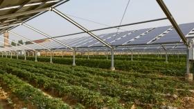 Agrivoltaísmo, para conciliar rendimientos agrícolas y energías renovables
