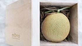 Un grupo de agricultores cultivan melones japoneses, una de las frutas más caras del mundo, en pleno centro de Malasia