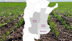 Sugieren adelantar la fecha de siembra de trigo en el Nodo Centro