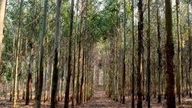 Analizan la efectividad de las forestaciones para mitigar el calentamiento global