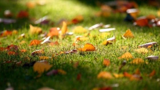 Césped de otoño: cuidados para prevenir plagas
