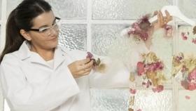 """Biomateriales: joven argentina creó una tela parecida al """"cuero"""" con microorganismos y yerba mate"""