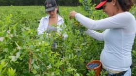Destinarán $60 millones para proyectos de mujeres rurales