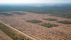Con esta tasa de deforestación, en 70 años nos quedamos sin bosques nativos en Argentina