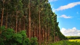 FAIMA: logística, créditos, exportaciones y suministro de madera son los temas que preocupan a las industrias PyMEs de Corrientes y Misiones