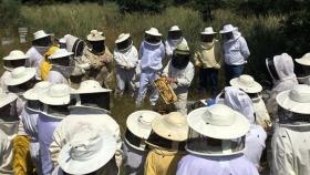 Prueban cuatro nuevas formulaciones para combatir la Varroa en las abejas