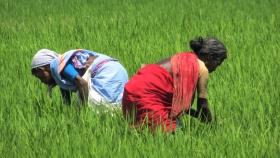 Reinvención de la agricultura india