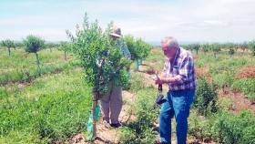 Una empresa española plantó 100 hectáreas de almendros en Candelaria