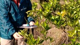 El INTA producirá batata semilla libre de virus en Entre Ríos