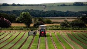 Los agricultores de las naciones descentralizadas del Reino Unido enfrentan grandes caídas en sus ingresos después del Brexit