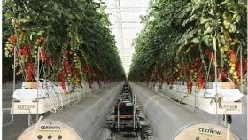 Una startup recaudó US$ 50 millones para producir tomates en el desierto