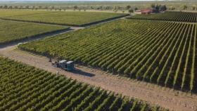 Malbec en Argentina: destacan el crecimiento y potencialidad de esta variedad insignia de nuestro país