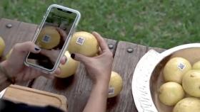 Tecnología para el limón: Unos tucumanos crearon un sistema para la gestión y trazabilidad de la fruta fresca