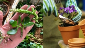 """Cómo hacer """"hijitos"""" de tus propias plantas"""