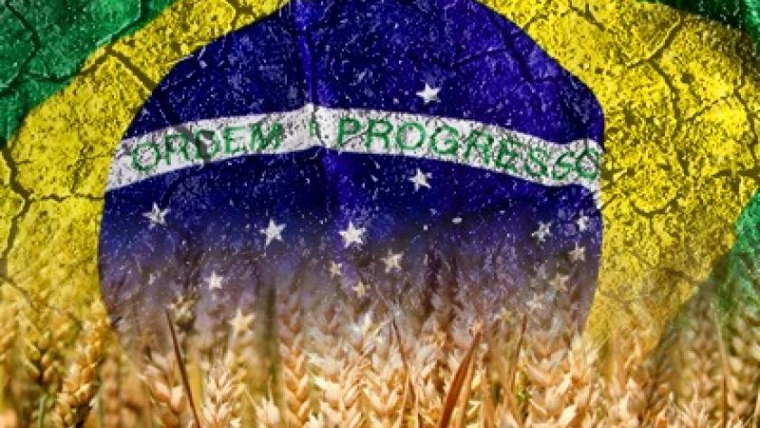 Trigo: Brasil va por todo