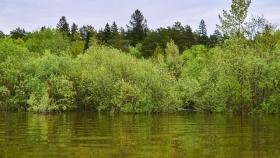 La inundación de bosques aumenta la concentración de gases metano
