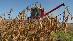 Soja: el cultivo aportaría US$8.000 millones más