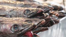 Las reservas marinas ayudan a recuperar la merluza del Mediterráneo