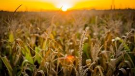 ¿Cómo planificar los impuestos en el agro?