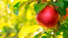 Fecofrut: avanza proyecto para crear una federación de cooperativas frutícolas