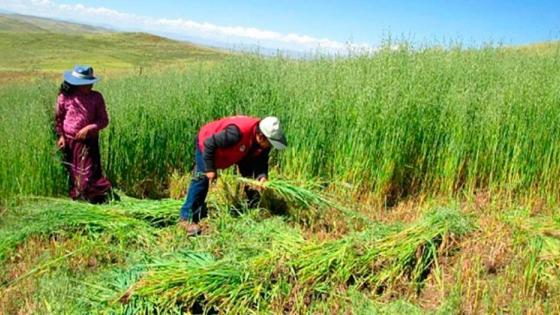 FAE Agro dará créditos a 270,000 pequeños agricultores a bajas tasas