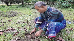 Un hombre plantó un árbol diario por 39 años y creó un enorme bosque