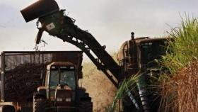 Los ingenios azucareros comienzan la zafra 2021 sin saber qué sucederá con uno de sus principales subproductos: el bioetanol