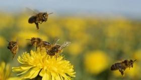 El mapa de las abejas