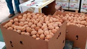 Exportaciones de nueces de Río Negro y Neuquén crecerán este año 20%