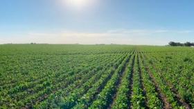 AAPRESID y Bioceres Semillas financiarán y bonificarán a productores certificados en prácticas sustentables