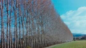 Productores deberán plantar cortinas forestales en las escuelas