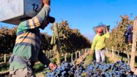 La vitivinicultura entra al programa de Asistencia al Trabajo y la Producción