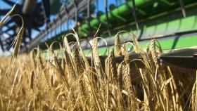 Estiman que la superficie para cebada se incrementará un 25%