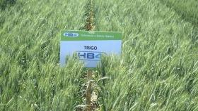Tras visitar Bioceres, el embajador Daniel Scioli anticipó que está cerca la aprobación del trigo HB4 en Brasil