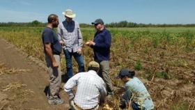 Papa: expertos universitarios de Dakota del Norte visitaron lotes de productores y ensayos del INTA