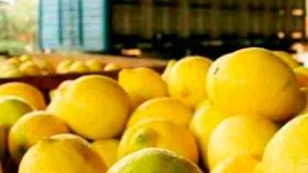 ¿Qué le piden los mercados internacionales a la fruta argentina?