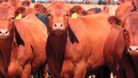 Viral: con un video, buscan demostrar que los productores no tienen incidencia sobre el precio de la carne