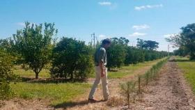 Corrientes, expectante ante la decisión nacional de apostar a pasteras de celulosa