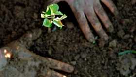Latinoamérica, es la región con mayor reducción de biodiversidad en el mundo
