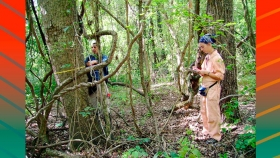 Confirman que los bosques andinos actúan como grandes depósitos de carbono