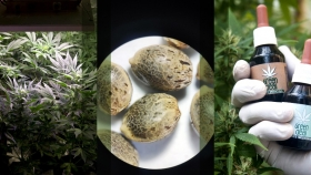 Ya está todo listo para que puedan comenzar a inscribirse variedades de cannabis en el Registro Nacional de Cultivares