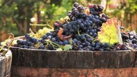 Mendoza le pone precio a la uva Malbec para contrarrestar los efectos de la pandemia
