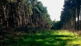 Forestación en pastizales de la llanura pampeana
